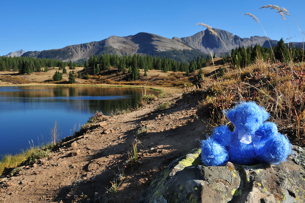 Snowdon Bear at Little Molas Lake