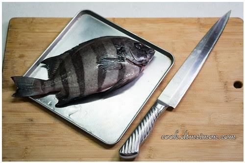 橫帶石鯛2吃01.jpg