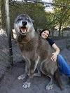 """Descubre que el """"perro"""" que adoptó no era lo que creía y decide ponerlo a dormir"""