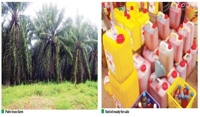 Oil Palm Farmers Complain Of Little Government Support