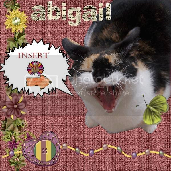Calico Cat,Domestic Cat,Talking Turkey