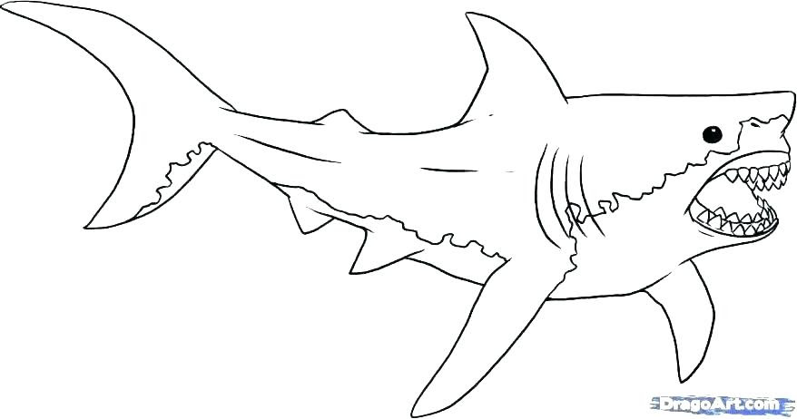 Great White Shark Coloring Page at GetColorings.com | Free ...