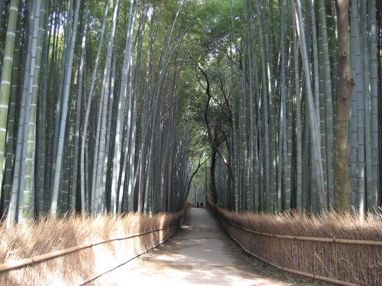 Photos of Arashiyama, Kyoto