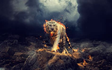 raging white tiger wallpapers hd wallpapers id