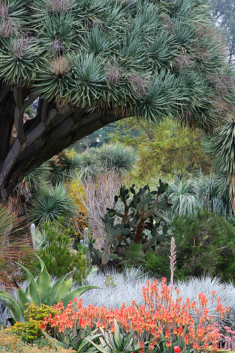 huntington succulent layers