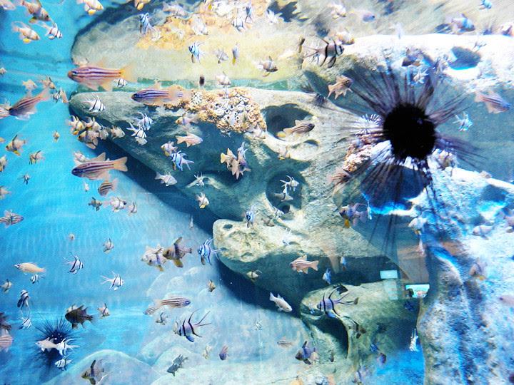 random fishes S.E.A. Aquarium world's largest aquarium
