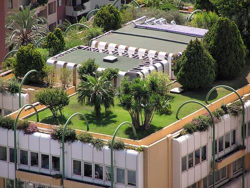 eco-roof-plants1