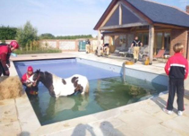 Pônei foi resgatado de piscina em Runcton, no Reino Unido (Foto: Divulgação/RSPCA)