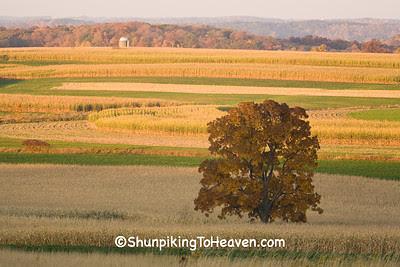 Lone Autum Tree, Sauk County, Wisconsin