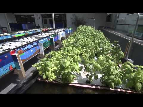 system what is a chop aquaponics system aquaponic integrated farming