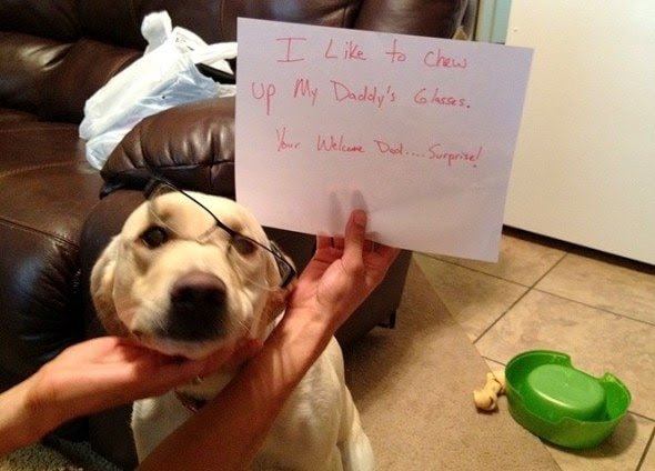 6.17.16 - Dog Shaming - Father's Day Edition4