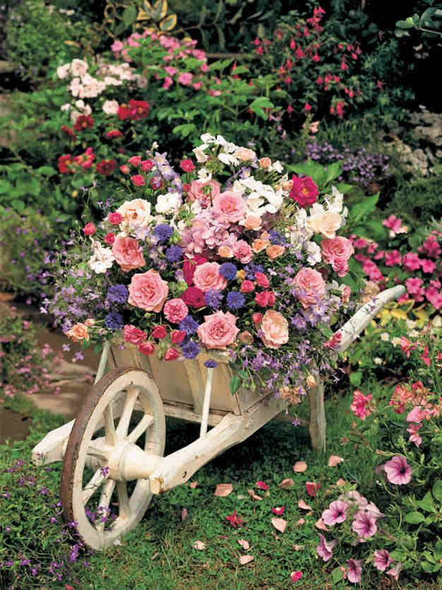wheelbarrow overflowing with colour.
