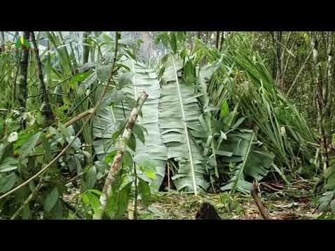 Vídeo: profissionais de saúde vacinam indígenas na Selva Amazônica