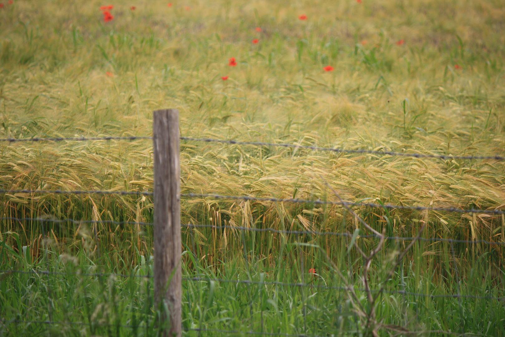 Fields Near Stonehenge photo IMG_1445_zps493d2309.jpg
