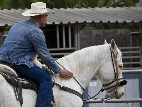 Horse and rider pals