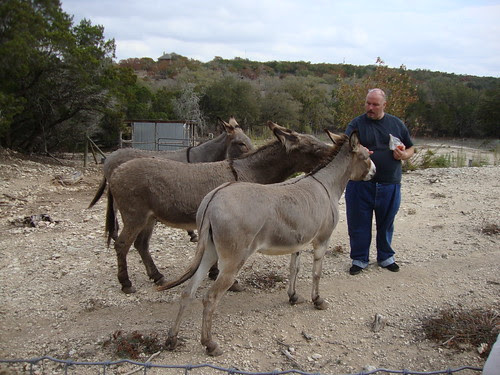 Benson feeds the donkeys