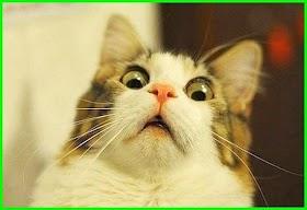 Gambar Kucing Ekspresi Lucu