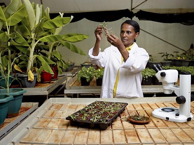 La mujer que quiere devolver la hierba a África