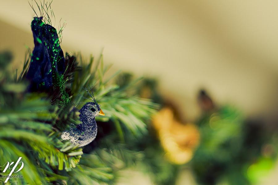 ~ 355/365 Christmas Time ~