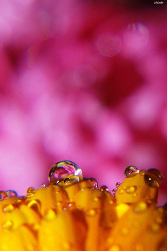 Flower macro, Bokeh by Manuel Venegas