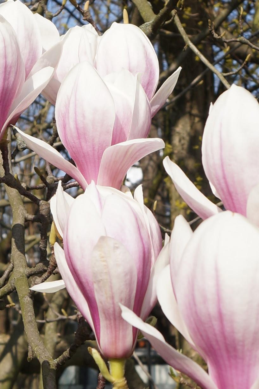 Blüte-5