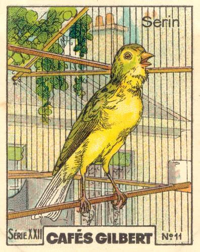 gilbert oiseau 10
