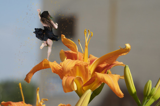 Lily Fairy Scattering Color Dust