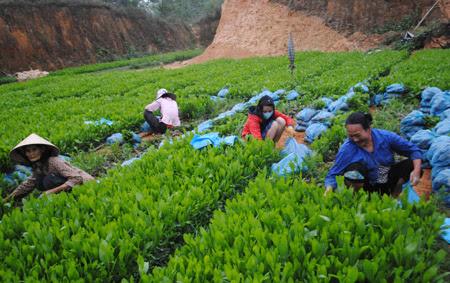 Vườn ươm cây giống của gia đình chị Lê Thị Long tạo việc làm cho 10 lao động.