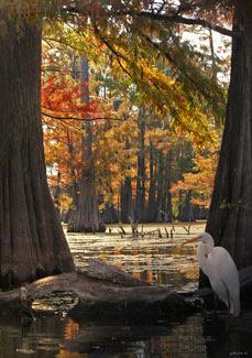 egret frame cypress