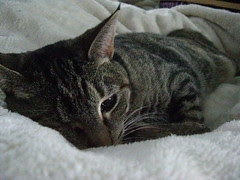 Maggie snuggled in