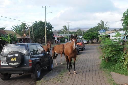 horses in town, hanga roa