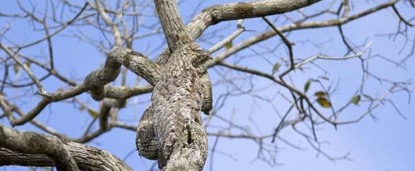 Απίθανες φωτογραφίες ζώων που είναι μετρ του καμουφλάζ (18)