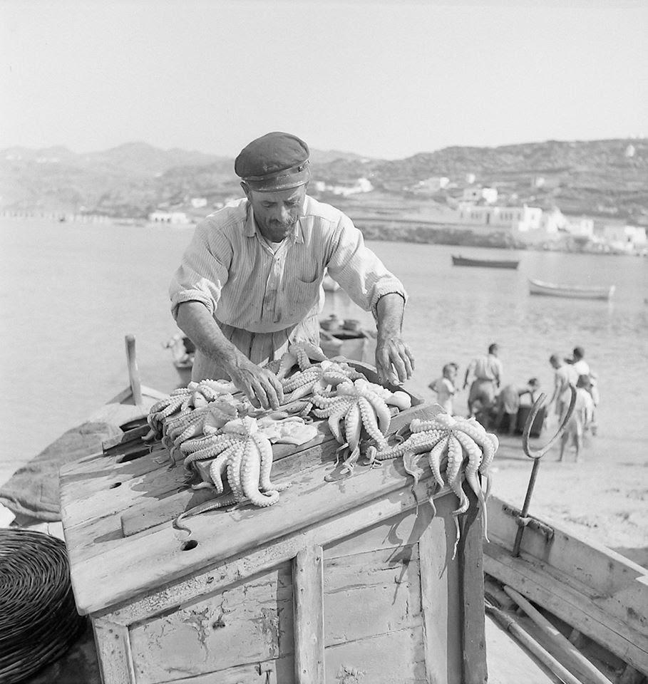 Φρέσκα χταπόδια πριν ξεραθούν και γίνουν μεζές, στη Μύκονο το 1960