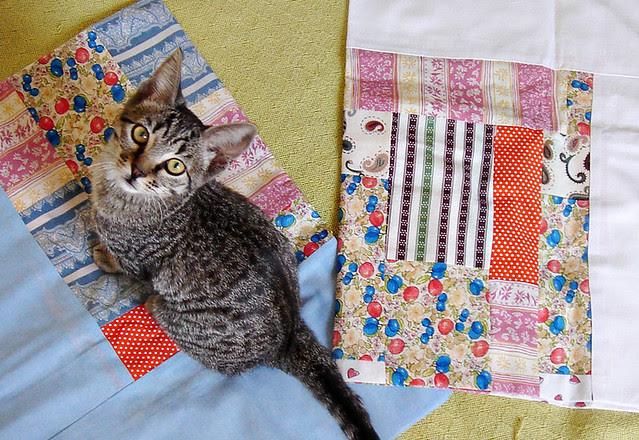 A gata e a colcha II