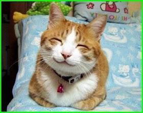 Kucing Lucu Gendut