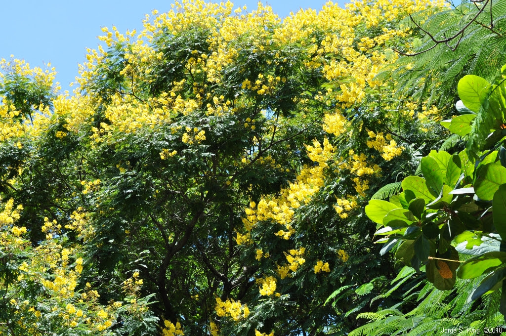 Flores de Yvyrá-pytá