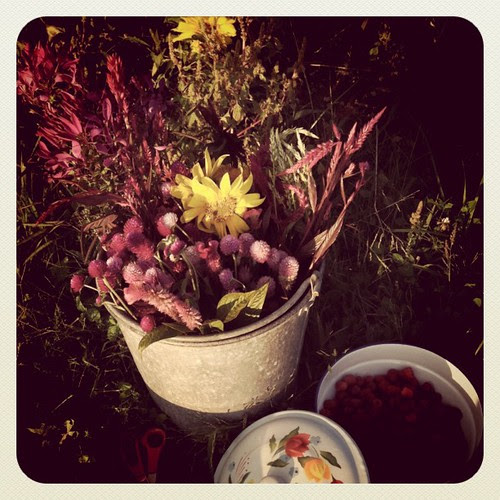 Last night at the farm: berries for my family & flowers for my botanical printing class.