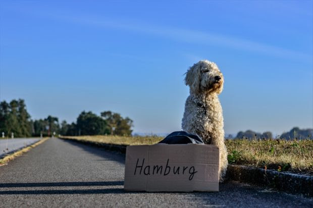 Traveling with your Pet: Best Destinations and Must-have Essentials