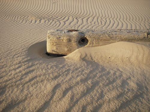 phone pole drifted sand