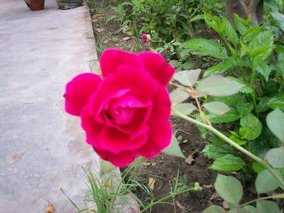 India Garden August Garden Bloggers Blooms Day