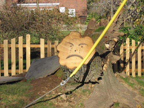 Frownie face tree stump