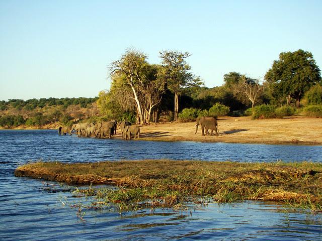 DSC09401 Crocodiles and Elephants