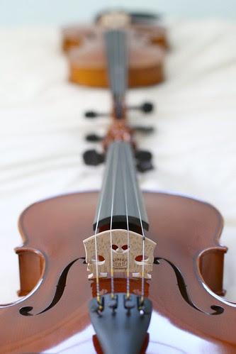 new-viola