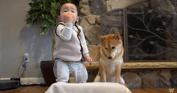 A Patience Test Between A Dog And A Child Will Amaze You
