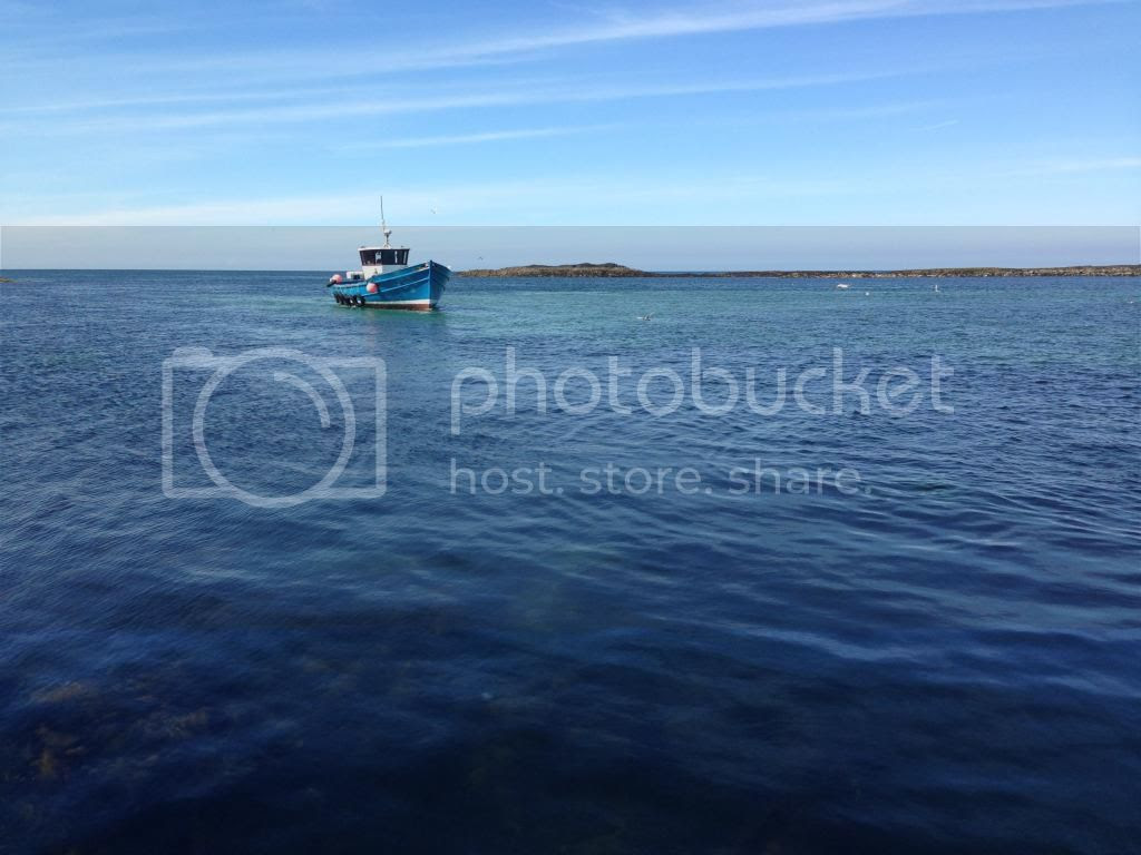 Farne Islands Boat Trip Northumberland Travel Blogger