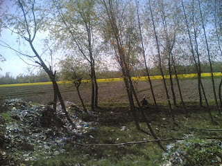 Plastic polluting the beauty of Kashmir
