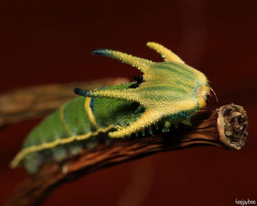 transformacao borboletas 5