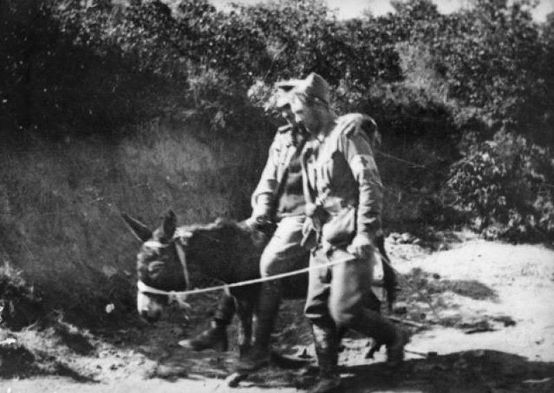 Um jovem e seu burro, heróis da Primeira Guerra