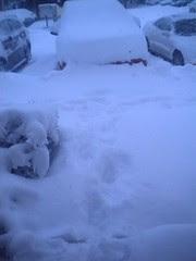 Blizzard of '09 from my front door