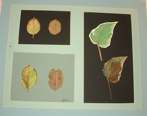 colro study of leaves ( one is real and one is painted)